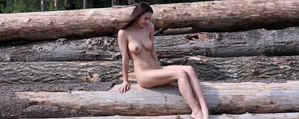 Helga Lovekaty – Ścięte drzewa